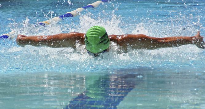 Billing-swimmer